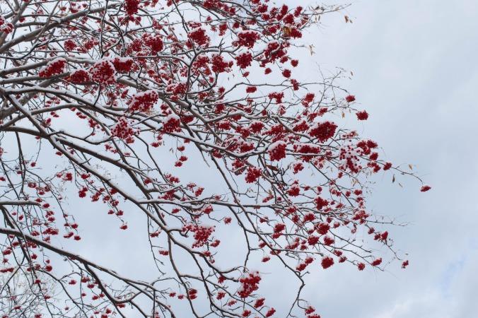 Sommacco, o albero della lacca